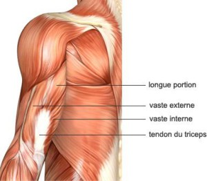 comment muscler ses triceps